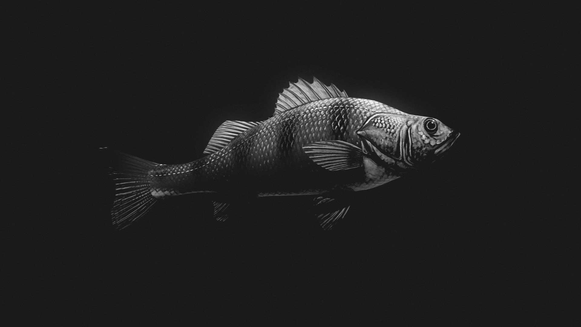 Animar-logo-peces-Pez-animarlogo